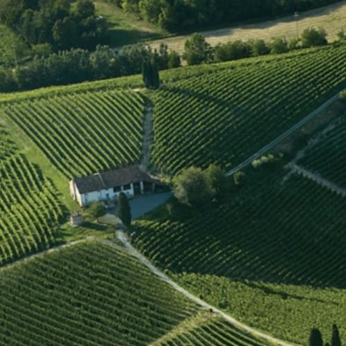 La vibrante bellezza del Vino!