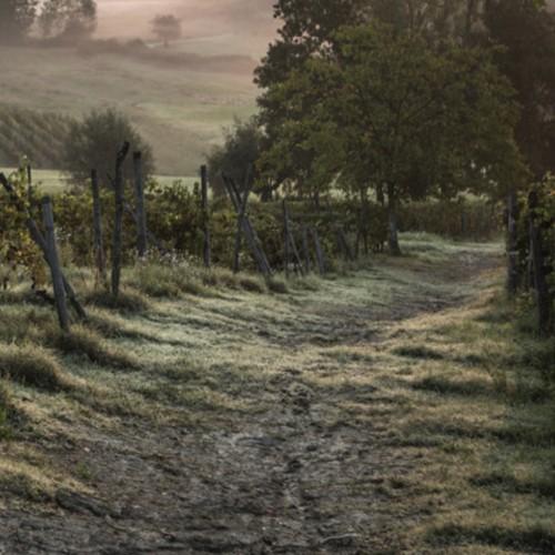Il richiamo dei boschi - Monferrato