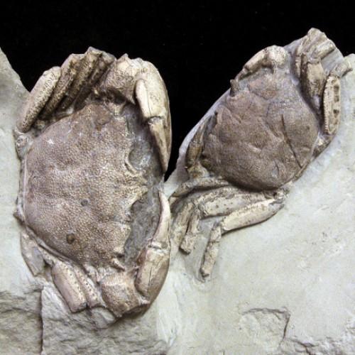 """Museo Paleontologico """"Giulio Maini"""""""