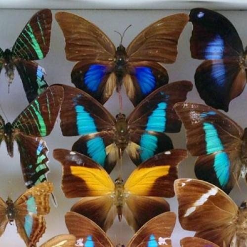 Museo civico Craveri di storia naturale