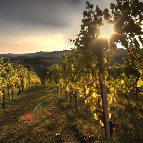 Wine Routes Moscato