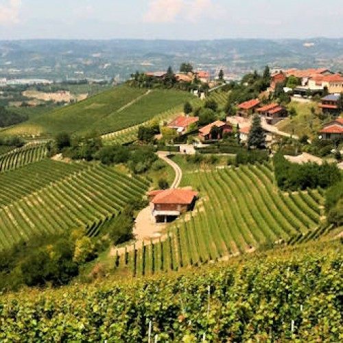 Barbaresco - Big Bench - Treiso - Alba