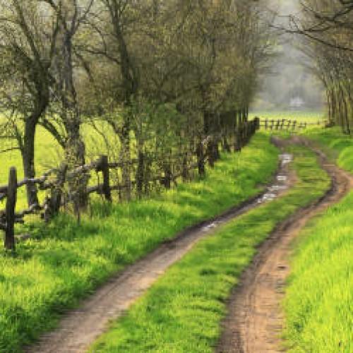 Il sentiero del bosco, Neive