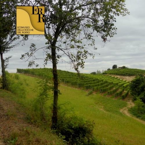 Sentiero del Tasso - Vezza d'Alba