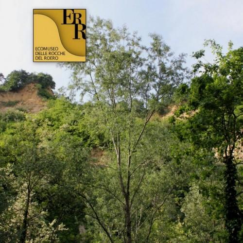 Sentiero della Rocca del Serro - Montaldo Roero